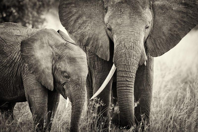 Agorastos Photography wildlife photographer