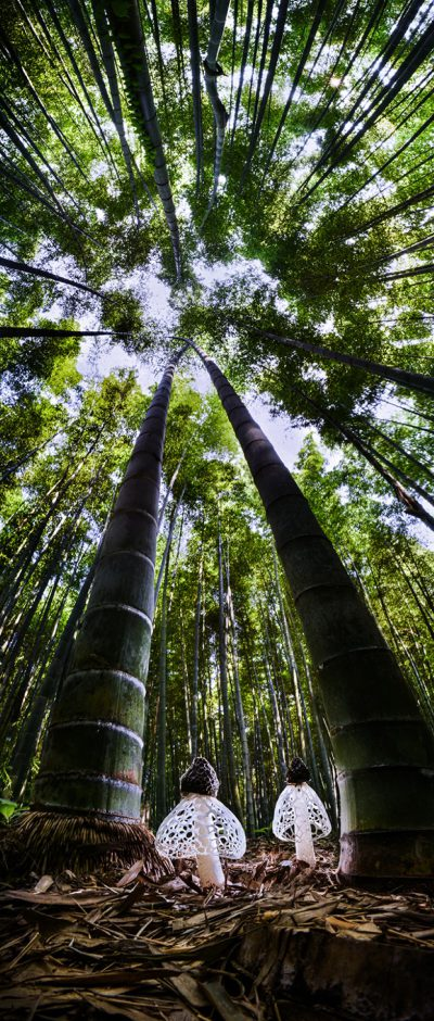 Spirits Of The Bamboo Forest