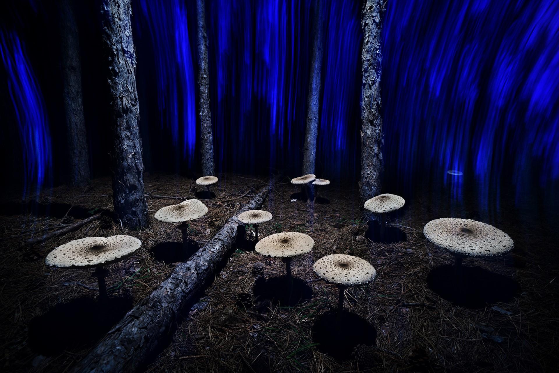 MontPhoto Magic mushrooms